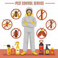 Pest Control Service In Austin TX